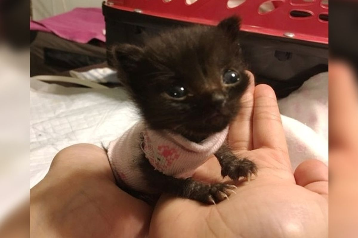 3-week-old Orphaned Kitten Size of a Newborn, Fights to Grow Big and Strong.