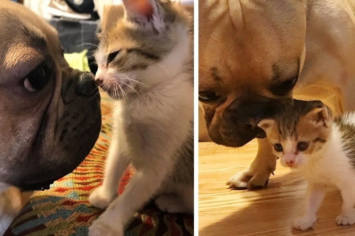 Motherless Kitten Found at School Is Loved By a Dog Who Won't Leave Her Side.