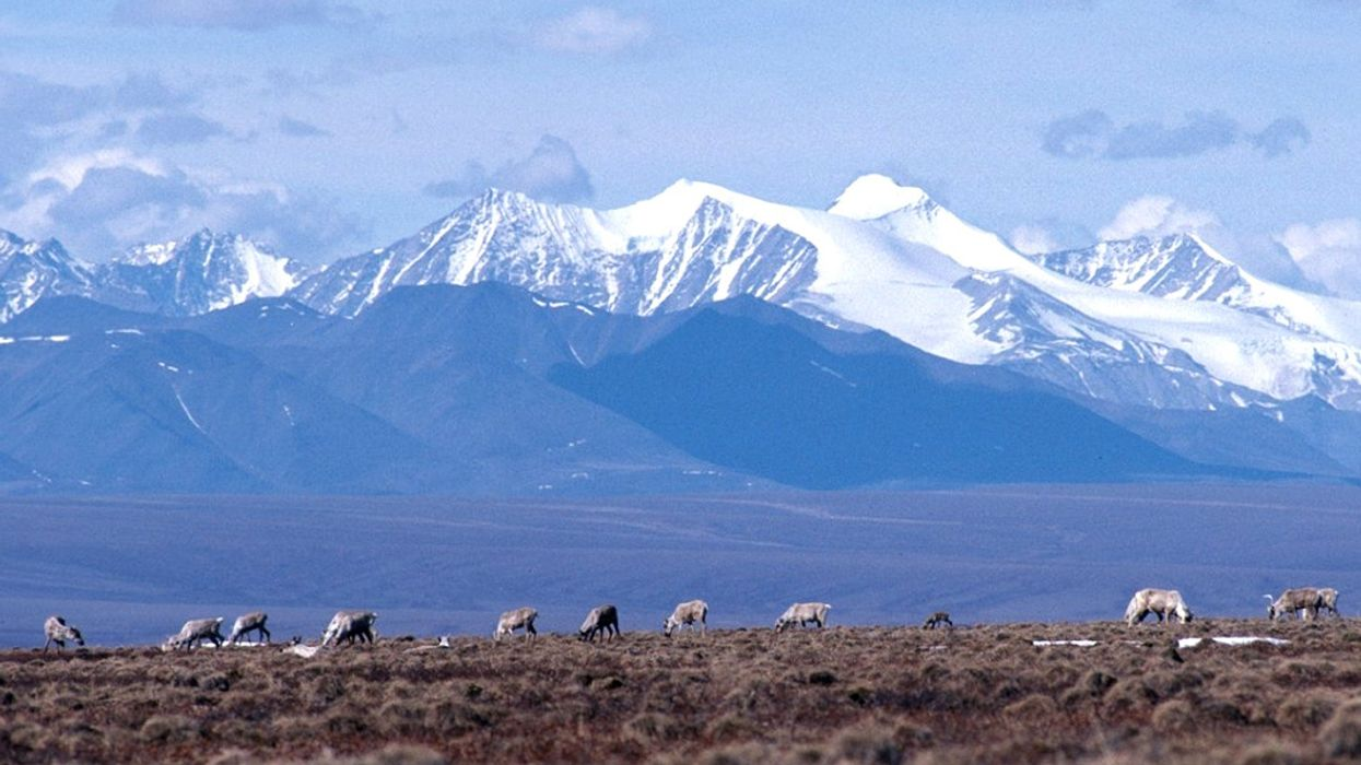 Interior Moves to Sell Oil Leases in Arctic National Wildlife Refuge