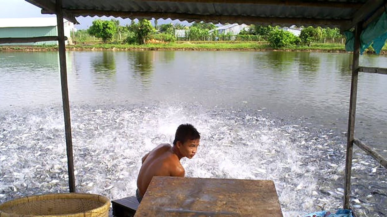Let Them Eat Carp: Fish Farms Are Helping to Fight Hunger
