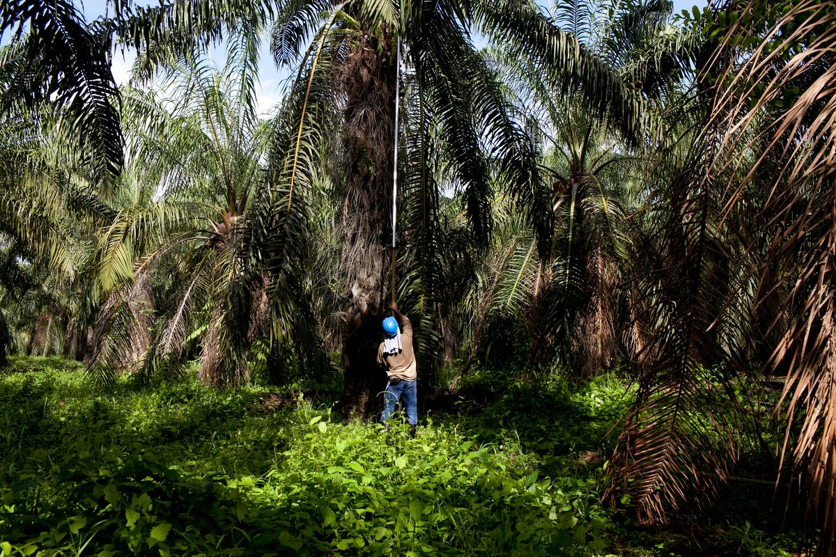 It's Time To Stop Consuming Palm Oil Once And For All