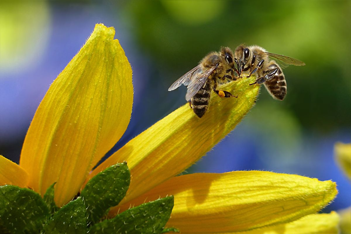 How To Help The Bourgeoning Bee Crisis