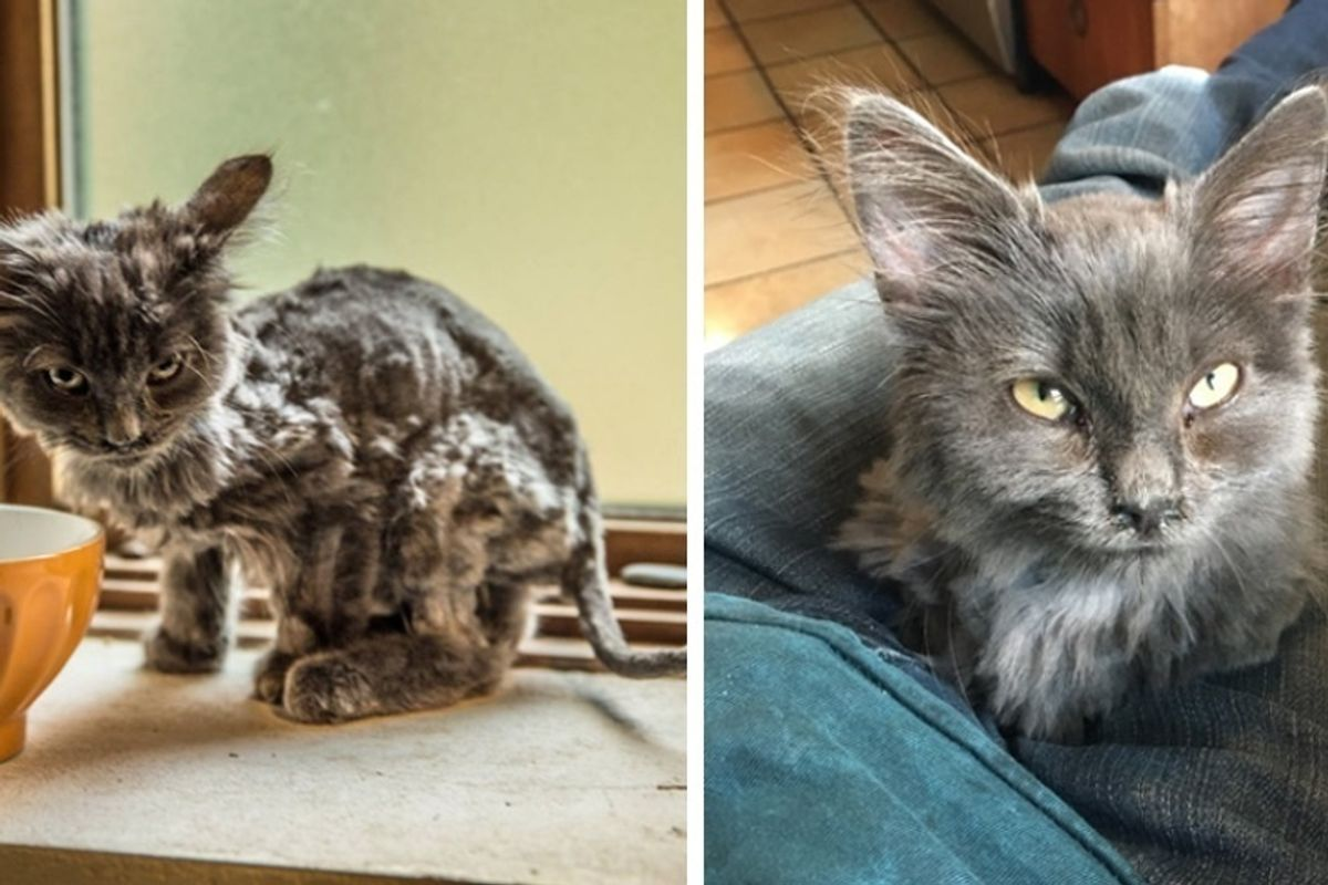 Scraggly Cat Found by the Road Comes Running When a Man Stopped for Her.