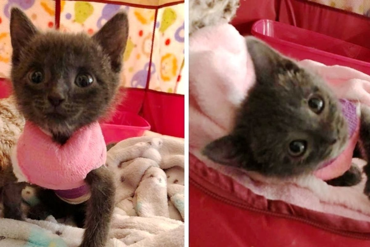 Kitten Cheated Death and Never Stopped Fighting and Purring Despite Her Deformity.