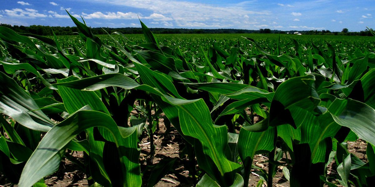 Glyphosate linked to shorter pregnancies in Indiana women