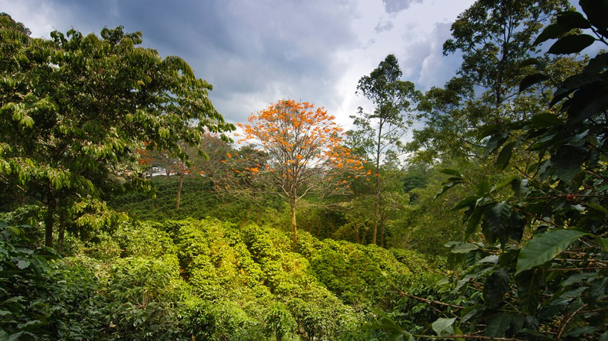 Which Coffee Is Better for Biodiversity?