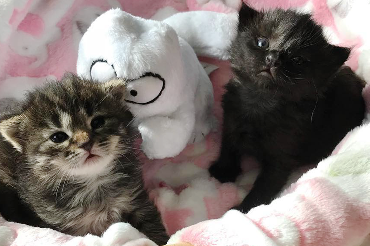 2 Orphaned Kittens Become Siblings to 3 Tinier Rescued Kittens in Need of Love.
