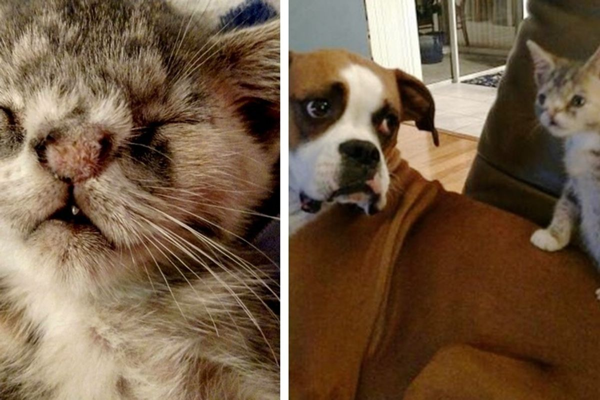 Kitten with Fuzzy Nose, Crooked Teeth Showed up on Doorstep, Finds Dog Sister to Love.