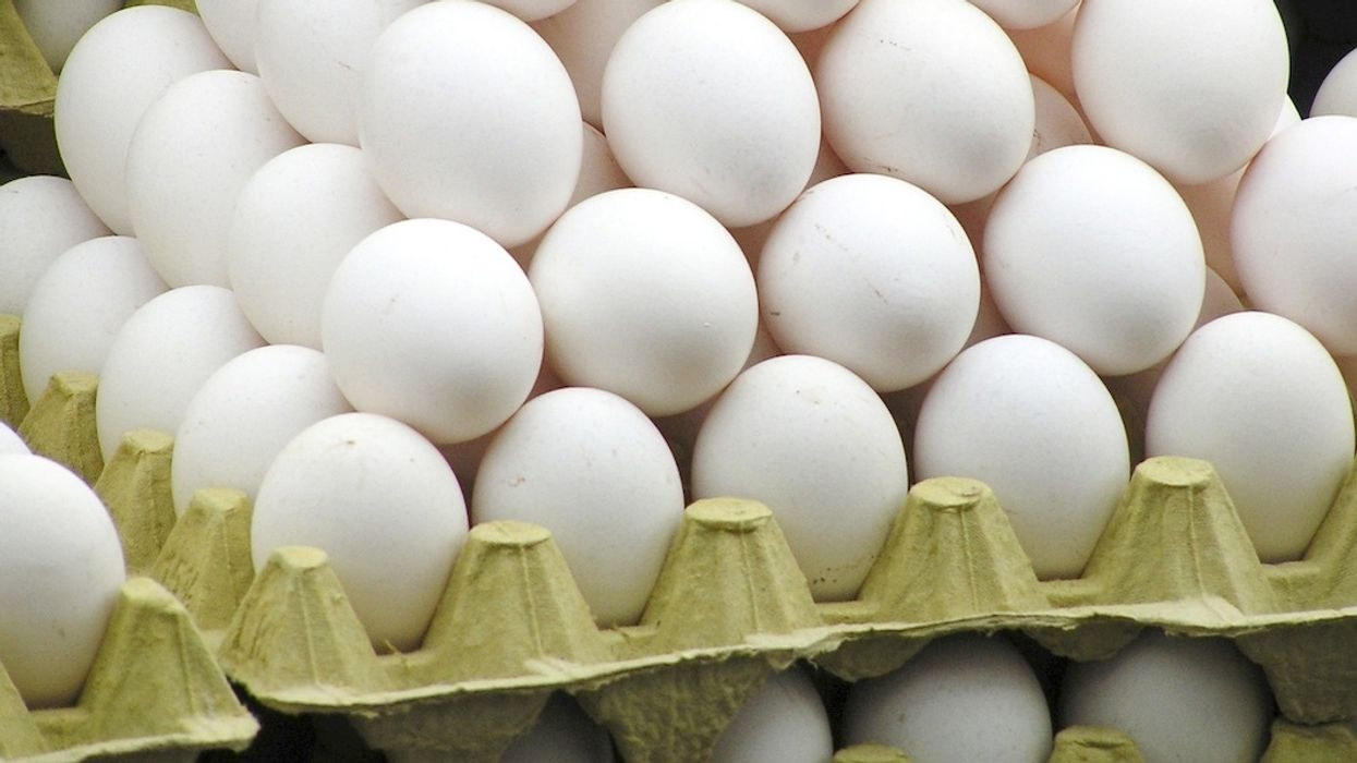 206 Million Eggs Recalled After Salmonella Outbreak, 22 Sickened