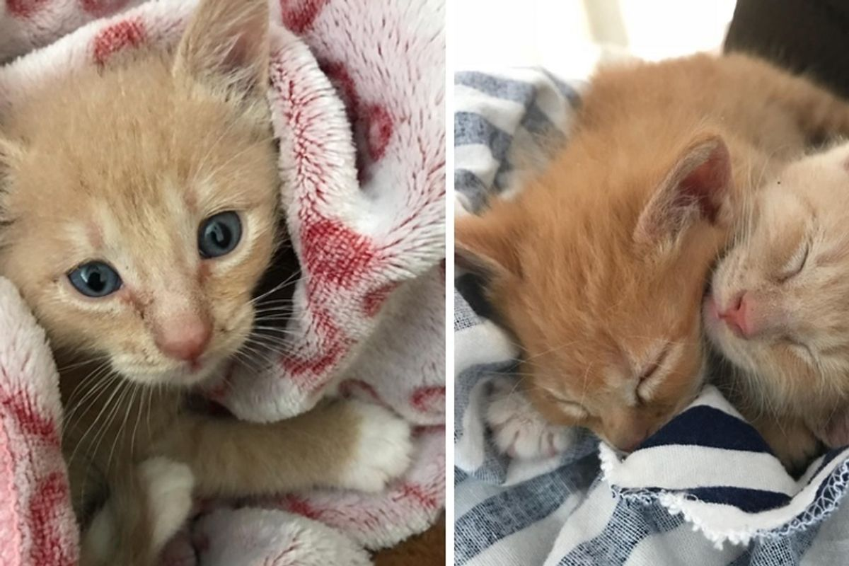 Kitten Found in a Backyard Never Purred Until He Met Another Kitty Saved From the Trash.