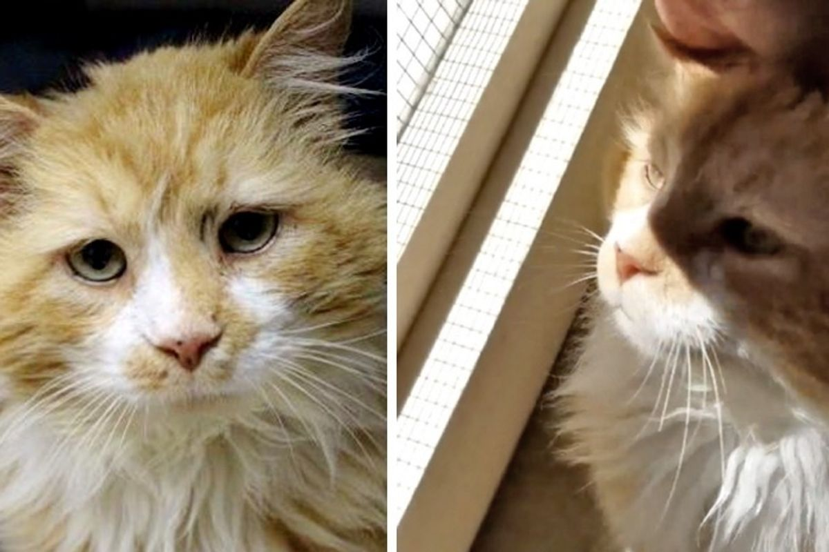 Cat Walked 12 Miles Back to His Original Family But Met with Heartbreak, Now Finds New Home!