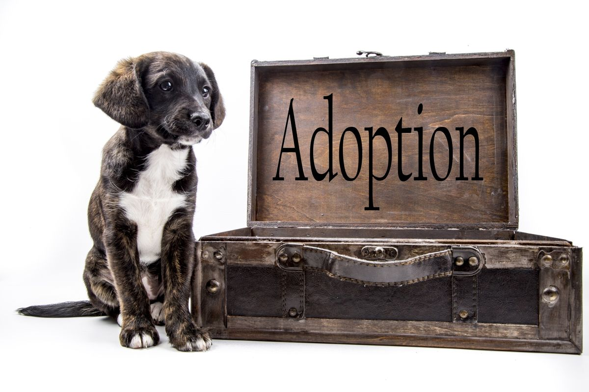 """""""Adoption"""" Isn't Just Animals from Shelters"""