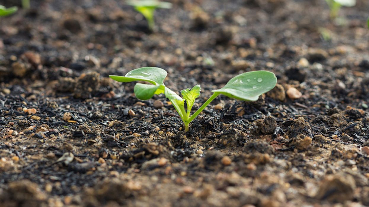 5 Nonprofits Sowing the Seeds of a Better Food System