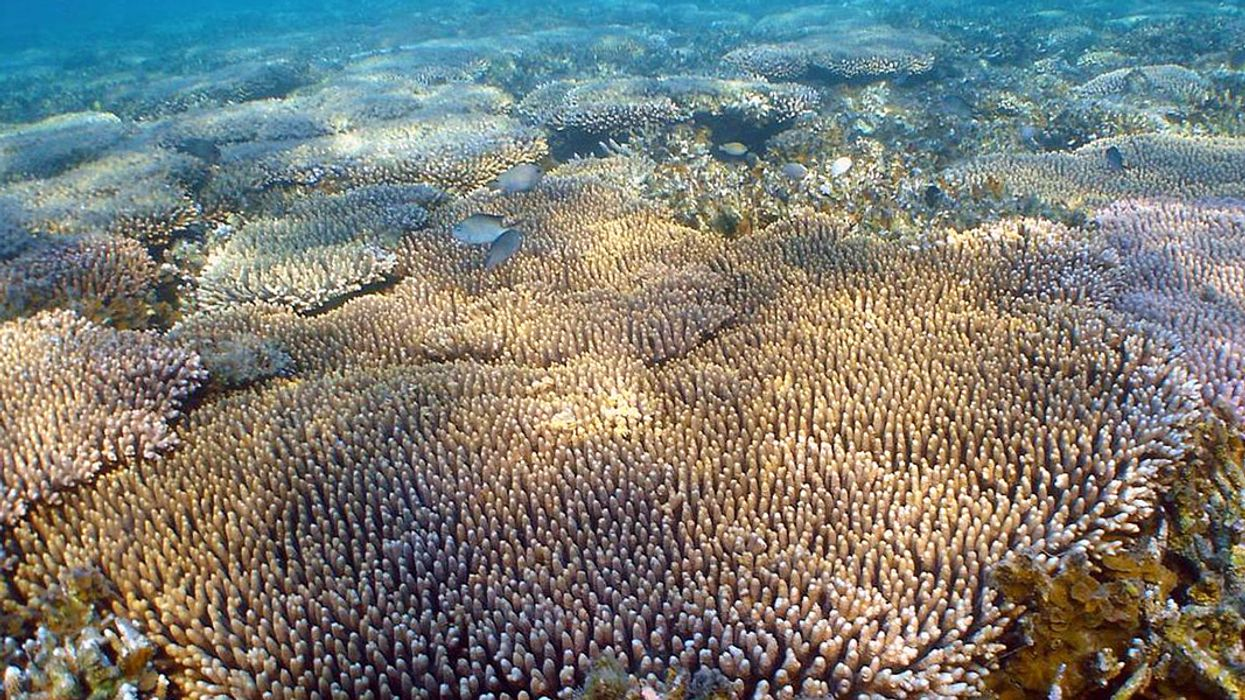 Hope for Great Barrier Reef? New Study Shows Genetic Diversity of Coral Could Extend Our Chance to Save It