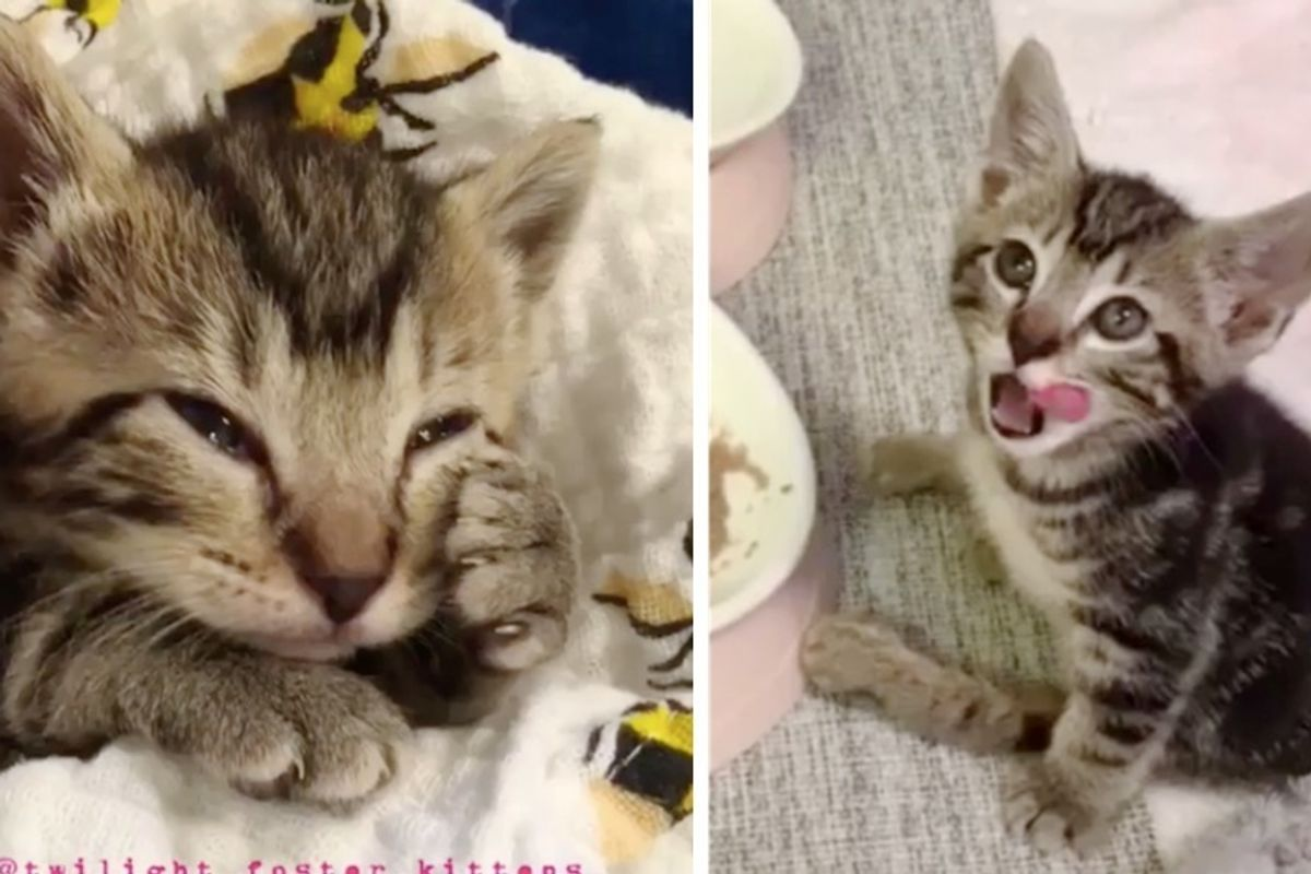 Kitten Who Can't Use Back Legs, Lets Nothing Stop Him from Loving Life