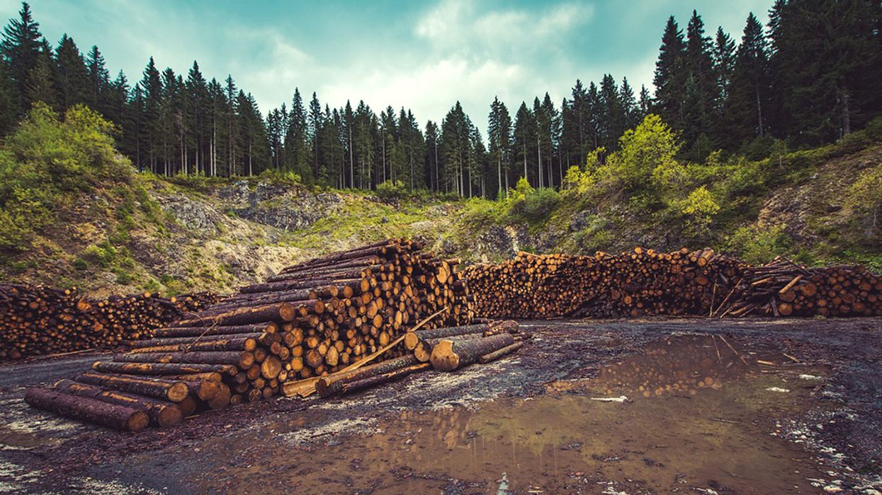 Deforestation Has Driven Up Hottest Day Temperatures, Study Says