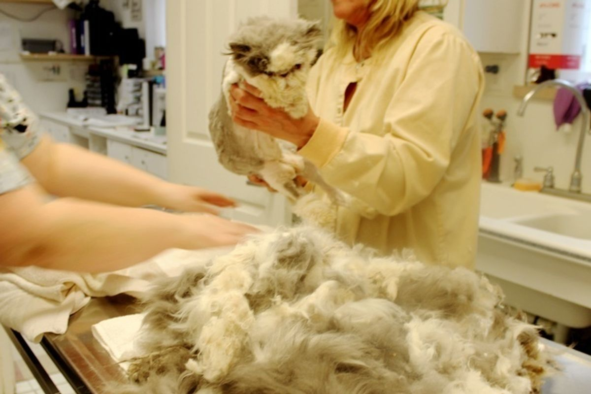 Cat Rescued from Harsh Condition, Gets Half Pound of Matted Fur Removed and New Makeover.