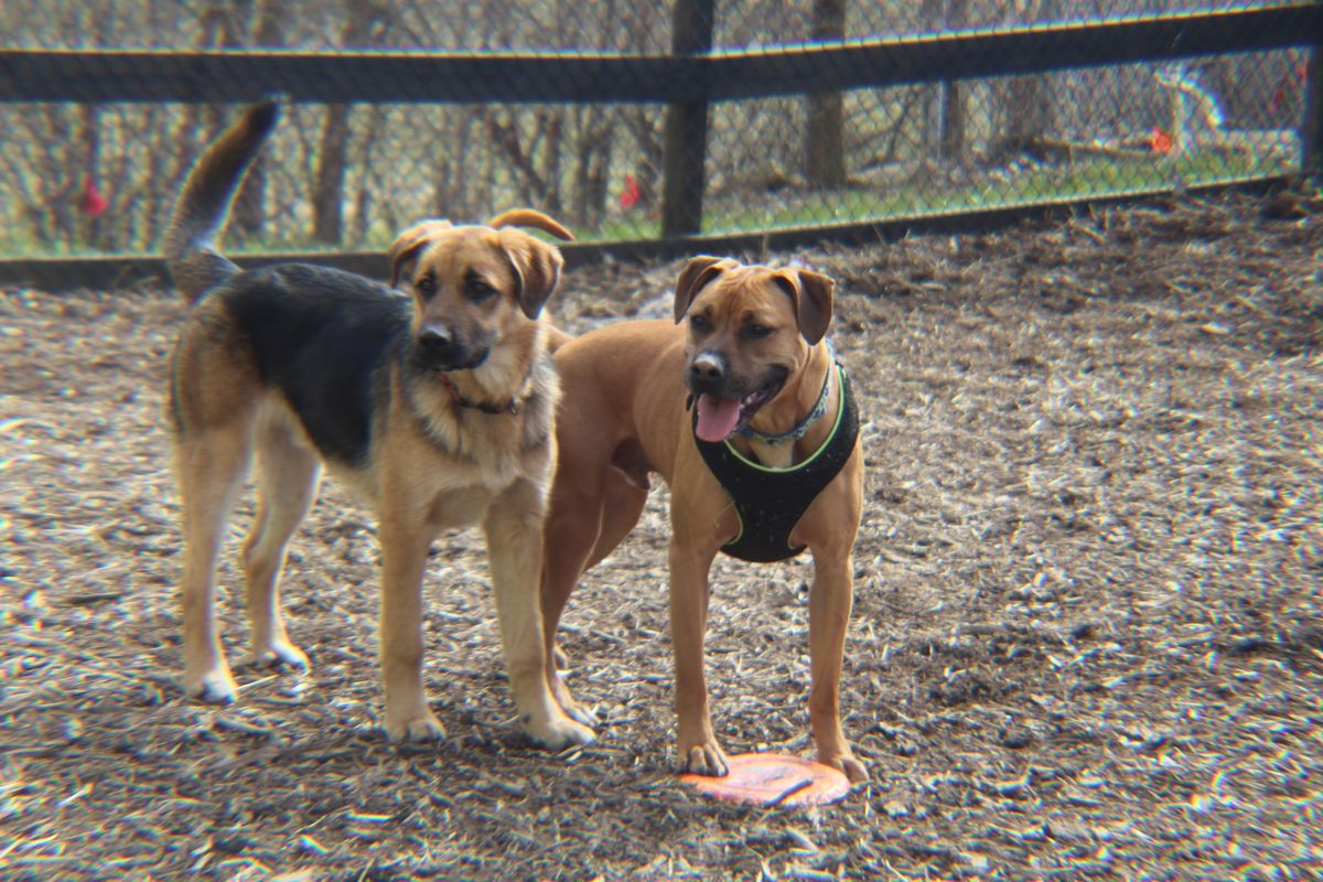 9 Reasons Your Dog Wants To Come To Wagglebottoms Doggy Day Care