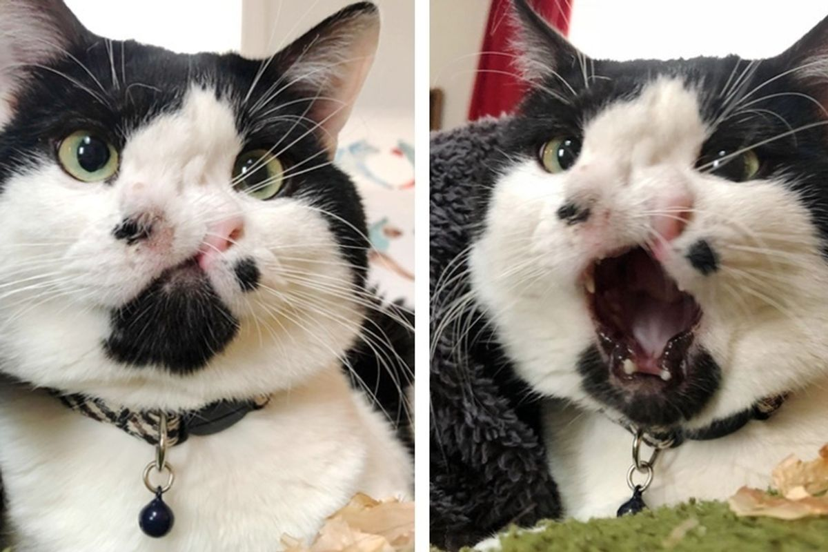 Woman Saves a 2-Nosed Cat While Other Shelters Turn Him Down