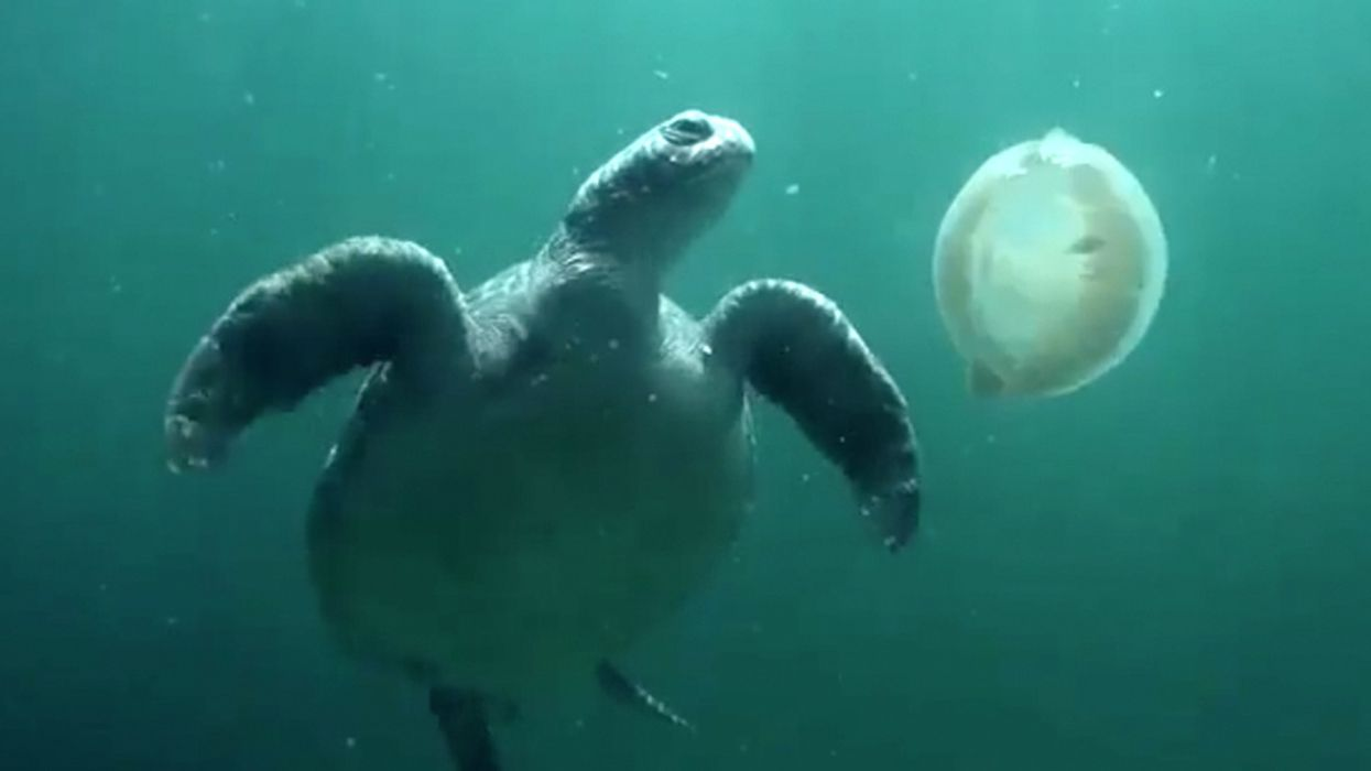 Plastic Bag Bans Actually Work, Study of European Waters Shows