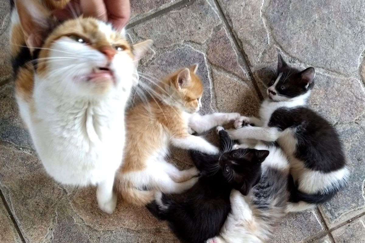 Stray Cat Mom Brings Her Kittens to Man that She Befriended, for Help.