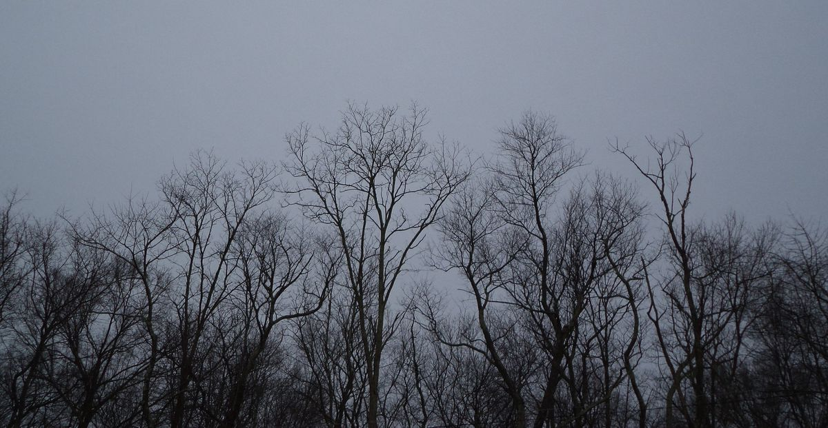 Creative Fiction On Odyssey: Living Under The Grey Sky