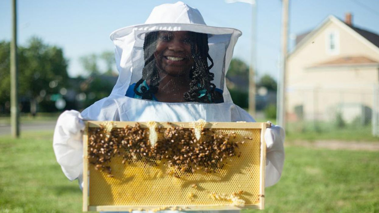 Detroit's Newest Industrial Workers: Bees