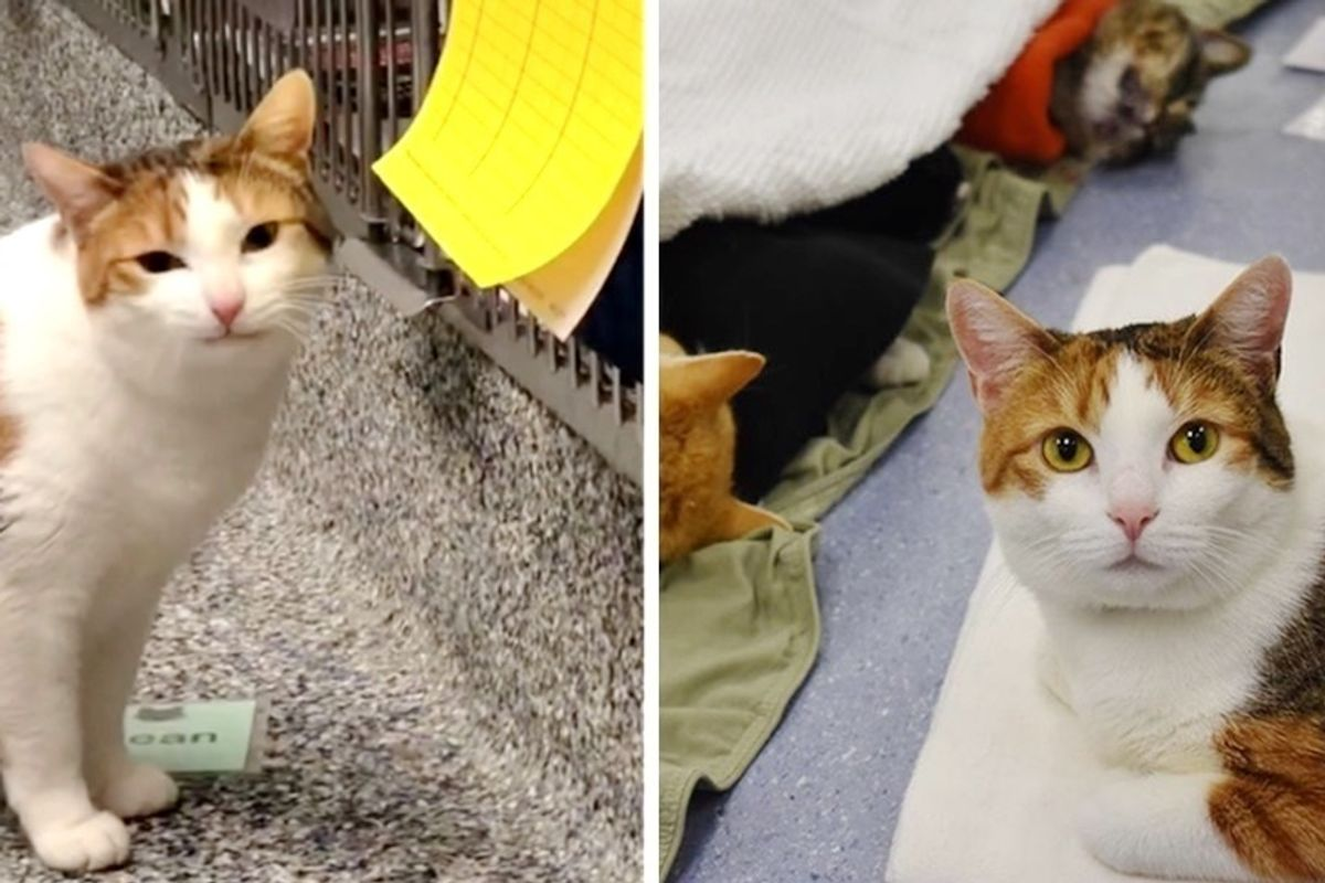 Wobbly Cat Comforts Rescued Animals That Come Through Shelter, and Keeps Them Company.