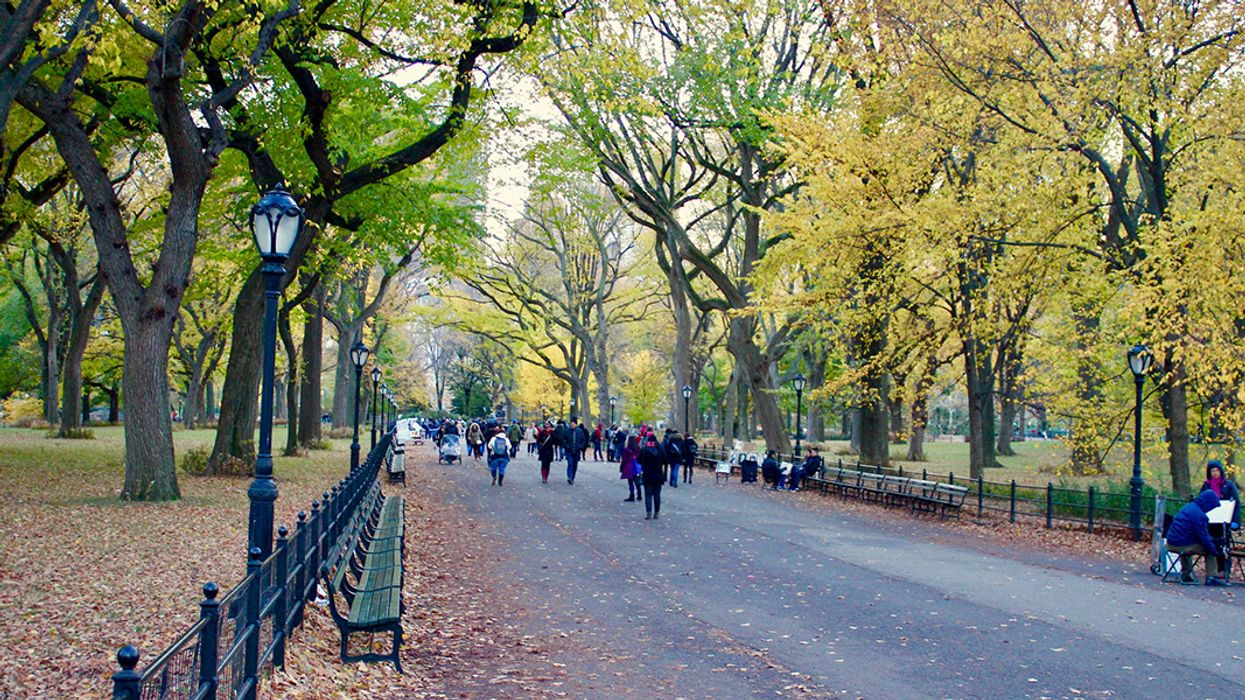 USDA Study Shows We're Losing a Concerning Amount of Trees in Cities