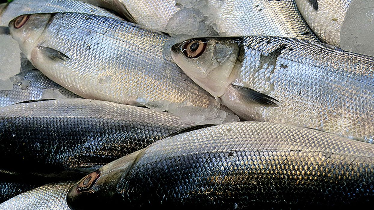 Scientists Launch Groundbreaking Study on Health Risks of Microplastics in Seafood