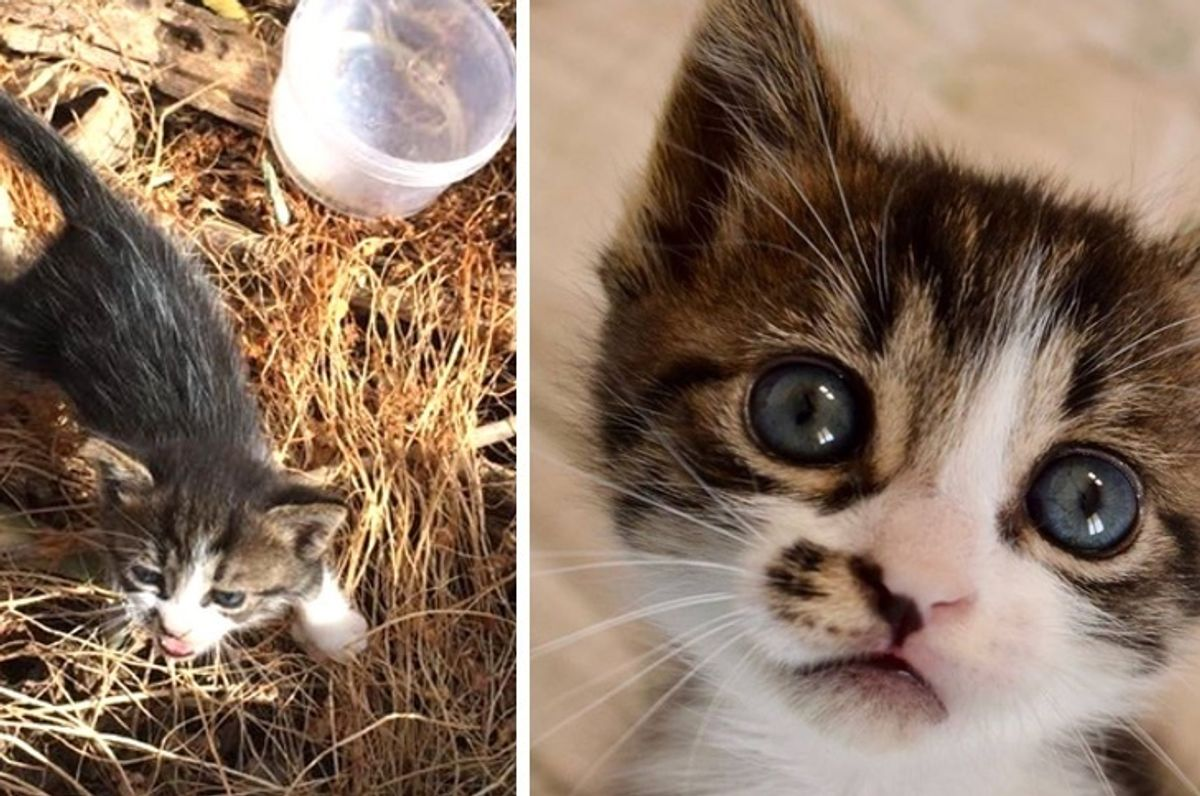 Kitten Found Near Dumpster is So Happy to Be Saved, She Can't Stop Cuddling Her Rescuers