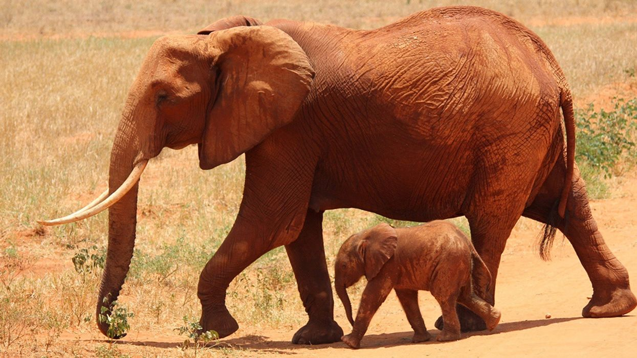 3 Reasons Elephants Make the Best Mothers