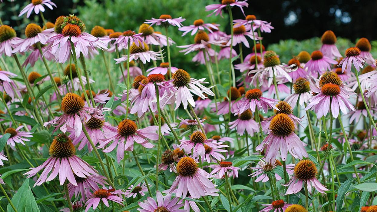 The Best Plants to Attract Pollinators, by Region