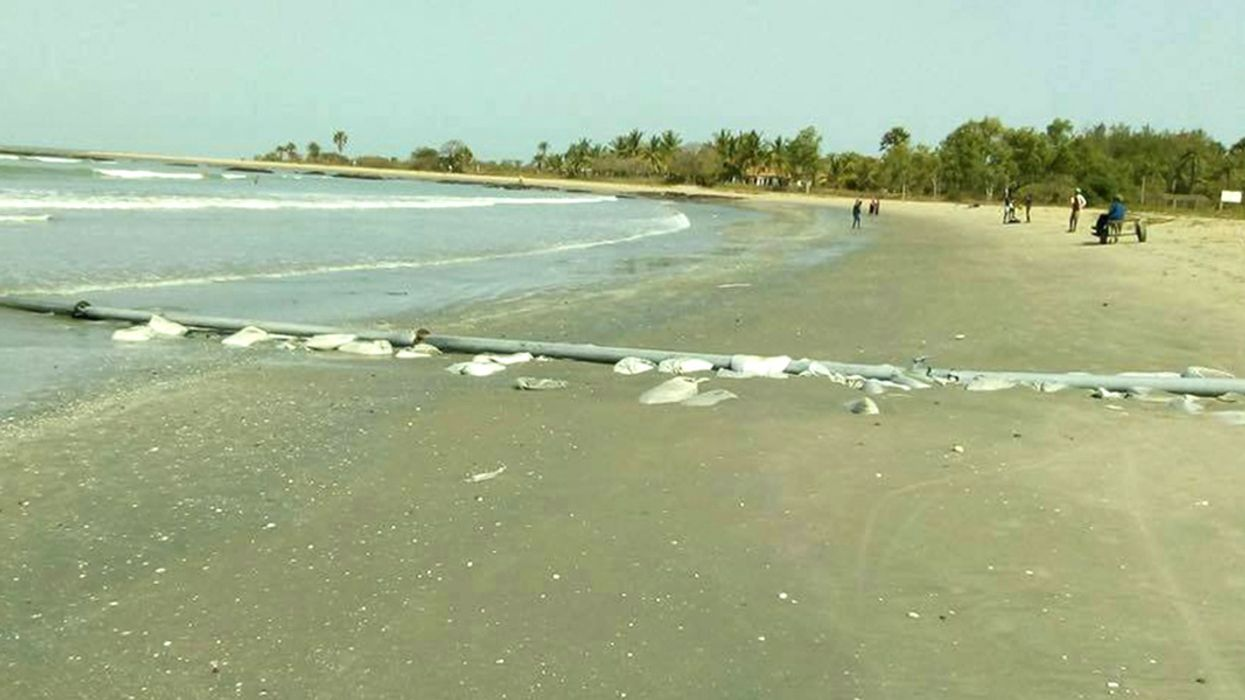 Dolphin Dead on Gambian Beach Blamed on Pollution From Chinese Factory