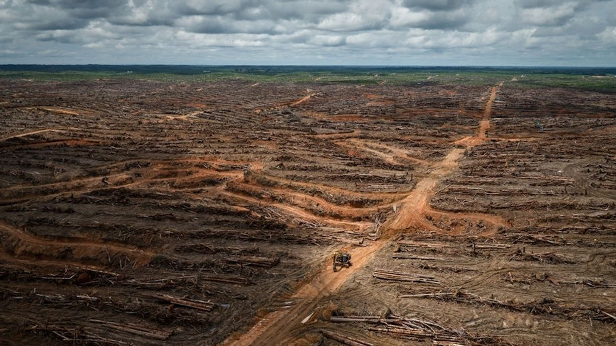 WHO's Push to Ban Trans Fats Could Pave Way for Palm Oil