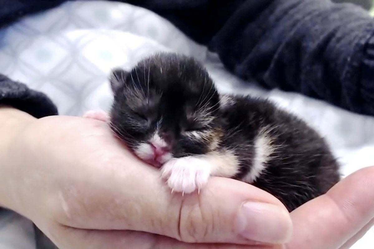 Kitten with Cleft Palate No One Knew Would Survive Her First Night, Beats the Odds