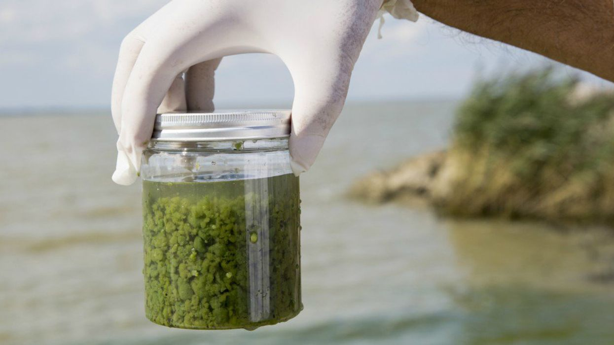 Across U.S., Toxic Algal Blooms Threaten Lakes and Other Waterways