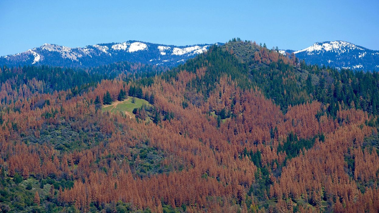 California Tree Loss Could Have Implications for Forests Nationwide