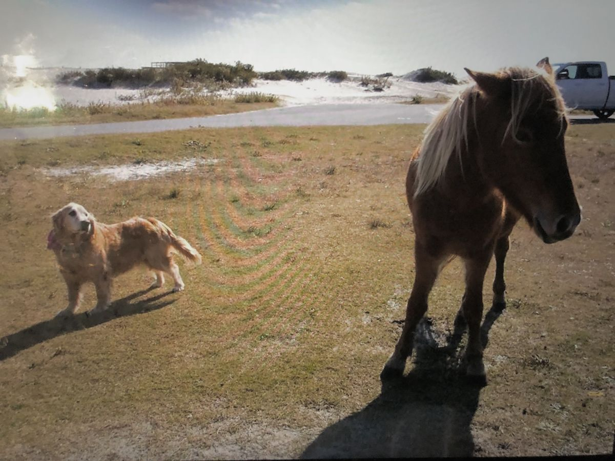 Assateague Island, A Magical Place Spanning Two States