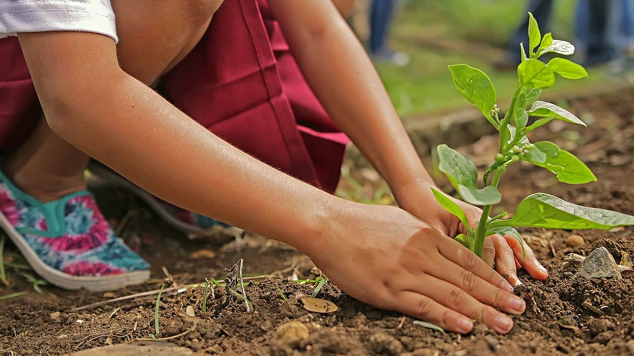 11 Reasons Why You Should Plant a Tree for Arbor Day