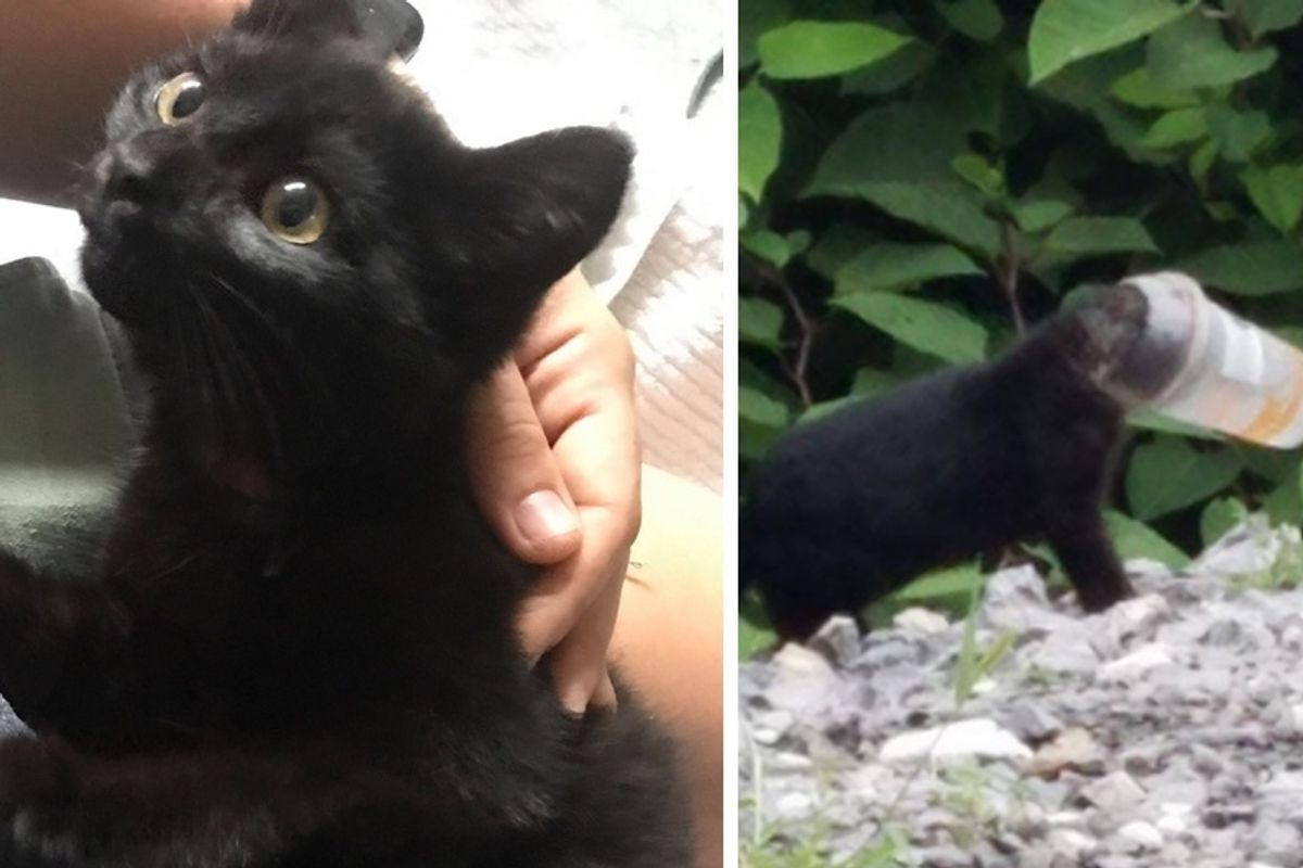Kitten Found Stuck in a Cup, Leads Rescuers to Save His Entire Family