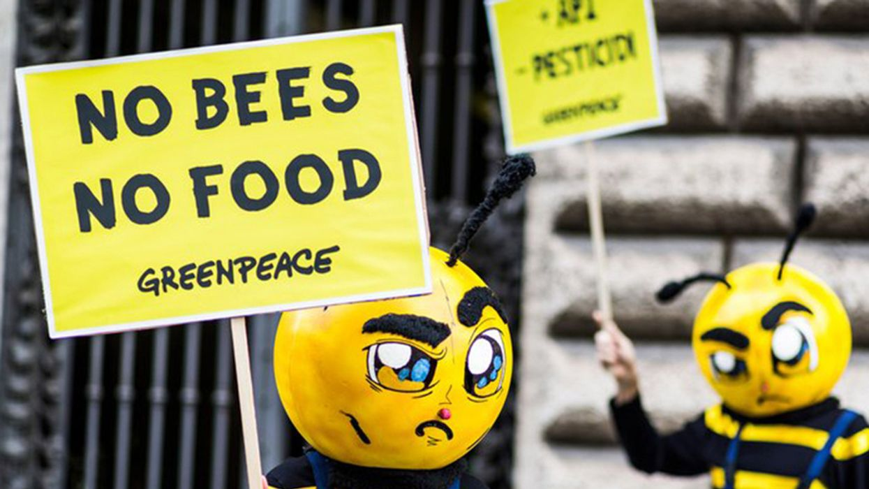 EU Approves Ban on 'Bee-Killing' Neonicotinoids
