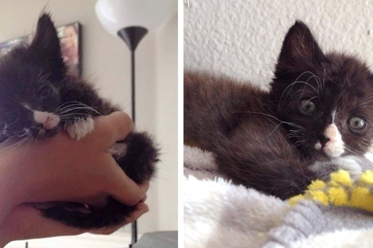 Kitten, No One Thought Would Survive, Bounces Back From the Brink with Her Fight to Live