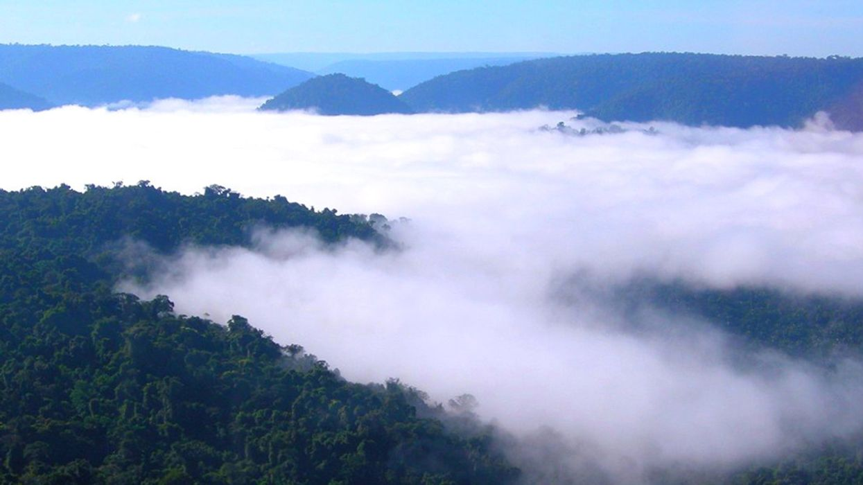 Climate Change Could Bring Drought to Amazon, Greater Rain to Pacific and African Forests