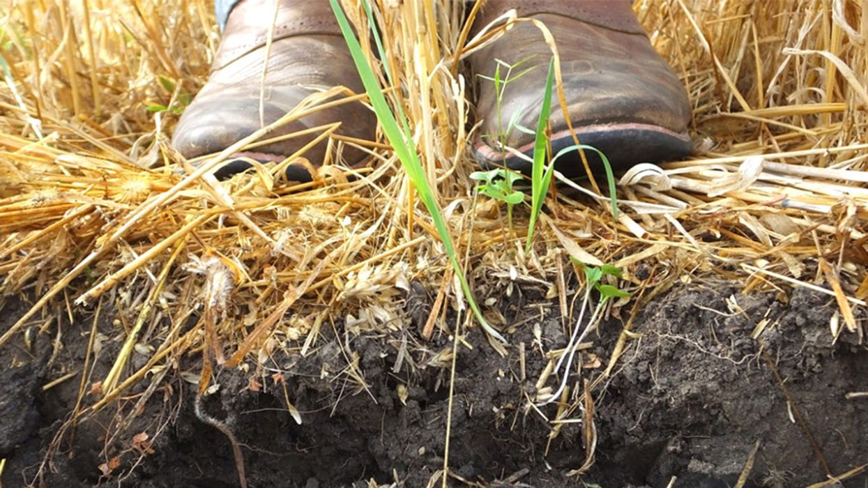 Healthy Soil: Good for the Farmer, Good for the Planet