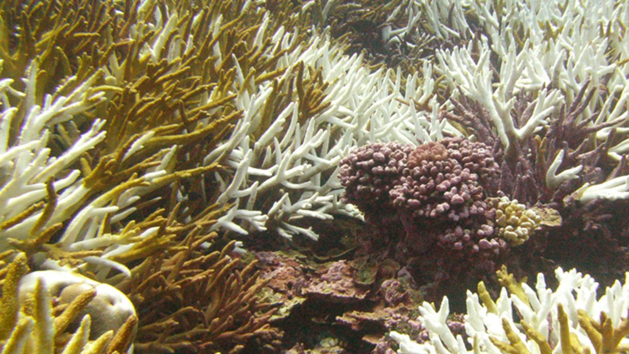 Hawaii Lawmakers Pass Ban on Coral-Damaging Sunscreen