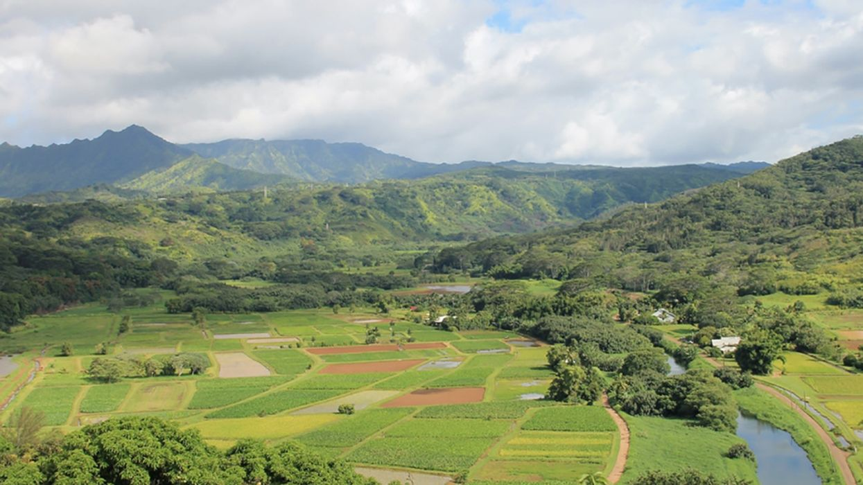 Hawaii Becomes First State in the U.S. to Ban the Toxic Pesticide Chlorpyrifos