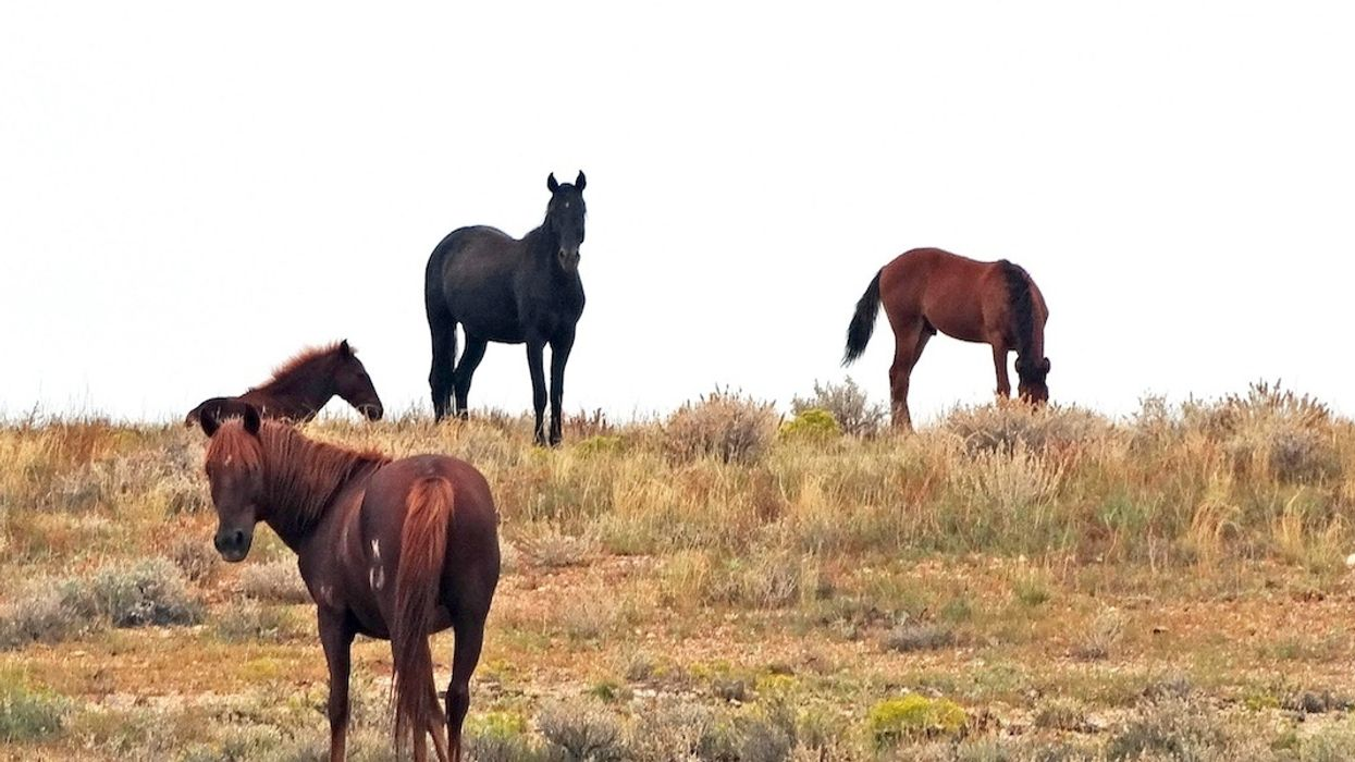 111 Wild Horses Die in Drought-Ridden Navajo Nation