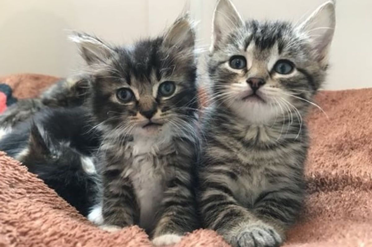 Kitten Saved from Hollow Tree, Brought Back to Life and Finds Love in a New Sister