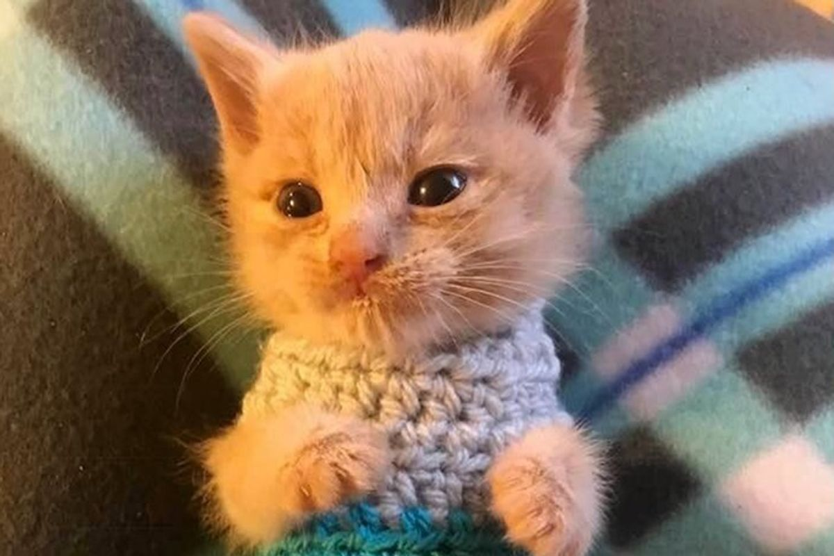 Kitten Saved From the Brink of Death, Finds Someone to Love and Won't Let Go